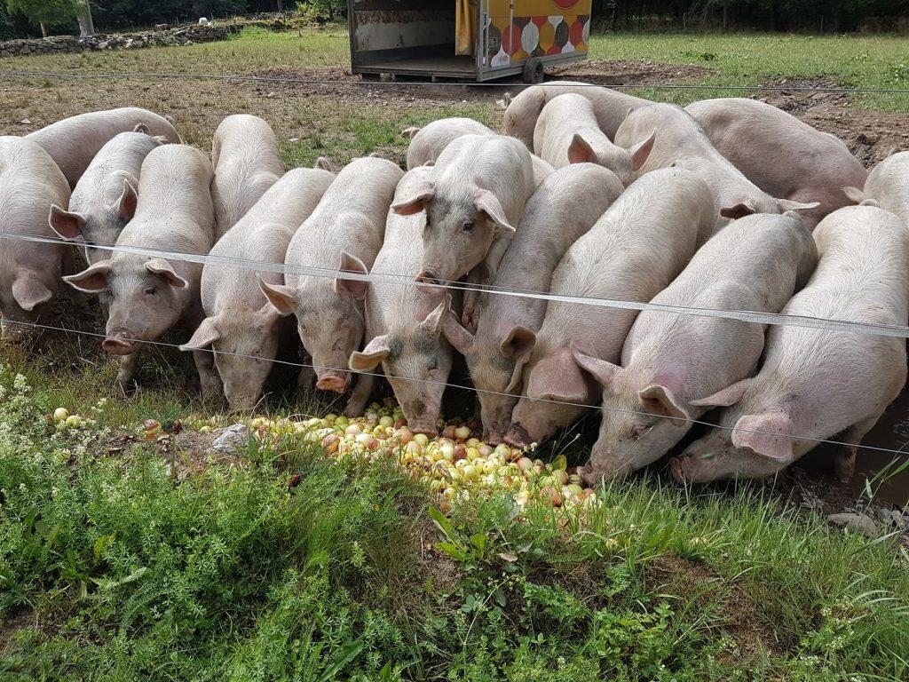 köttförsäljning
